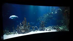 Aquarium Lighting Photo