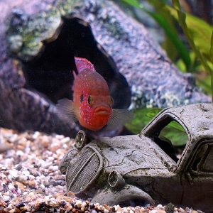 Decorating a fish tank